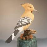African Hoopoe 1