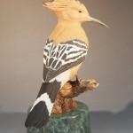 African Hoopoe 2