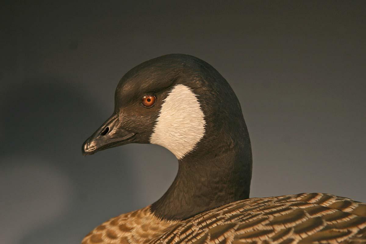 Canada goose decoy for Fishing license nc walmart