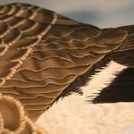 Cackling Canada Goose Decoy 4